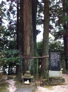 yuzuruha14