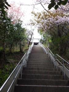 nushima4